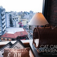My First Cat Cafe Experience